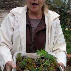 Jardin végétal et minéral 2