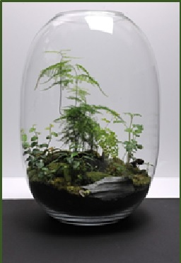 Vegetal en verre